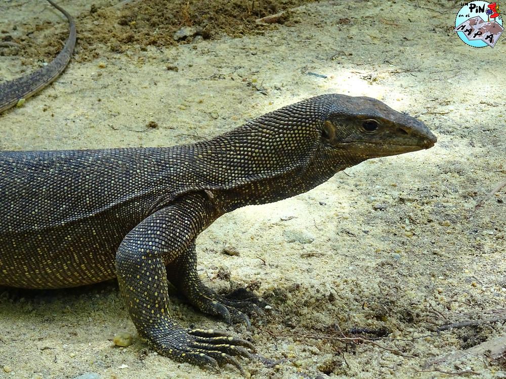 Fauna en las Islas Surin | Un Pin en el Mapa