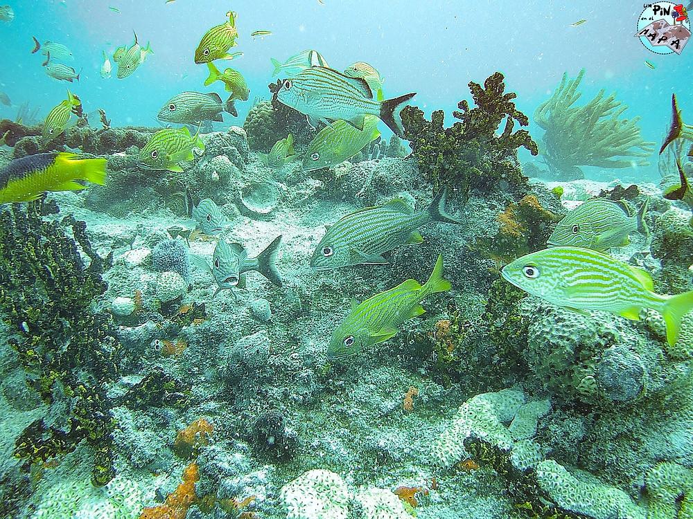Arrecife de Cozumel | Un Pin en el Mapa