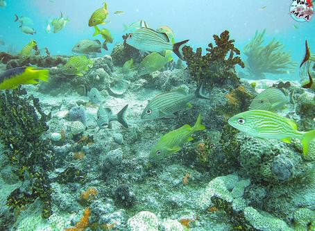 Bucear en Cozumel o Playa del Carmen: comparación e información