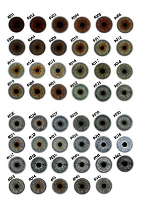 Iris prints - 30 iris sheets