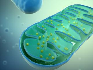 Как митохондрии влияют на наше здоровье? Доктор Ронда Патрик.
