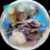Bubble_TV.png