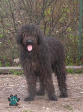 Benjy (2003)