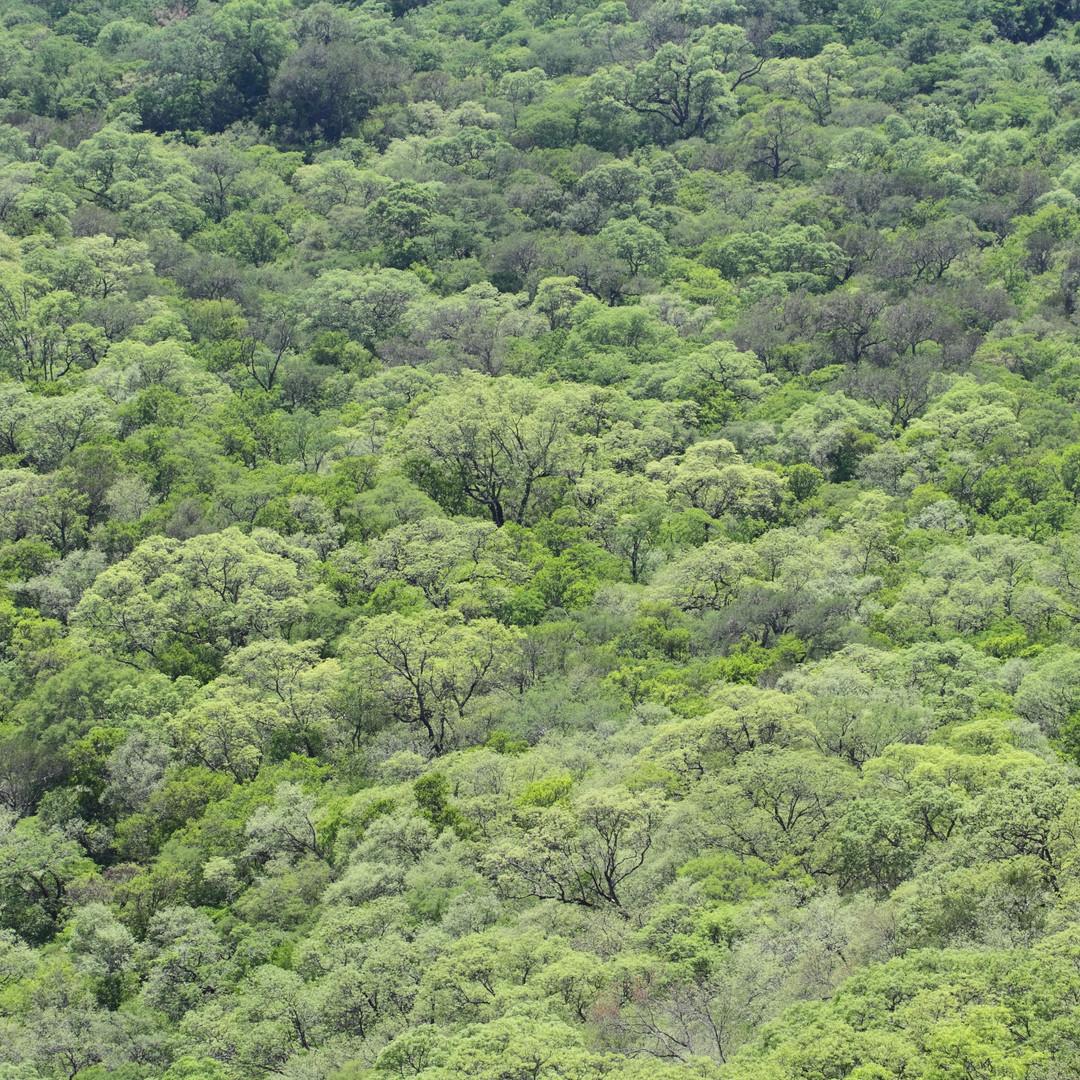 Chaco serrano1.JPG