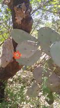 cactus chaco.jpg