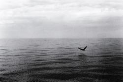 Banderas Bay 1