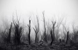 Refuge in Fog