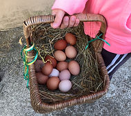 10.4.19 today's eggs.jpg