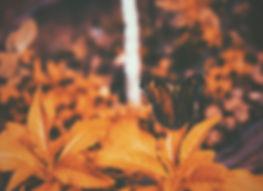 amith-krishna-280618-unsplash.jpg