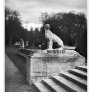 Kodak_TMax_100_121_CO1 Kopie.JPG