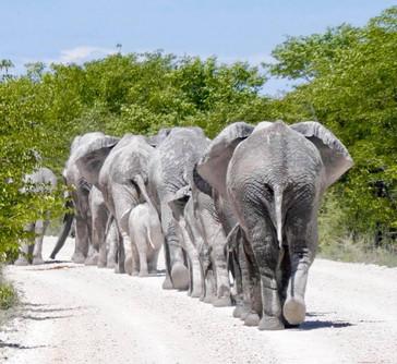 Harmony in Nature, Namibia