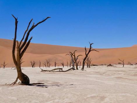 WINNER: Dry Namibia