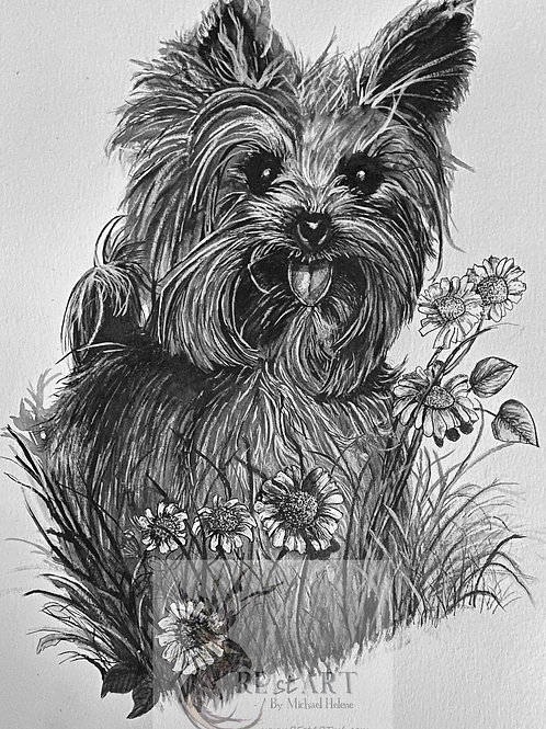 Yorkshire Terrier Ink Painting