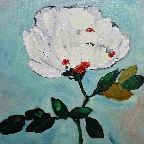 ** Sold White Carnation