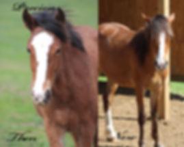 Precious Horse, Dreamchaser PMU