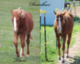 Dunbar Horse, Dreamchaser PMU