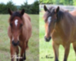 Tucker Horse, Dreamchaser PMU
