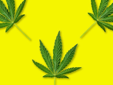 Basta de enrolar, é hora de legalizar!