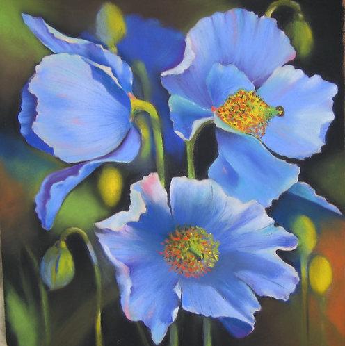 Hawaiian Blue Poppies