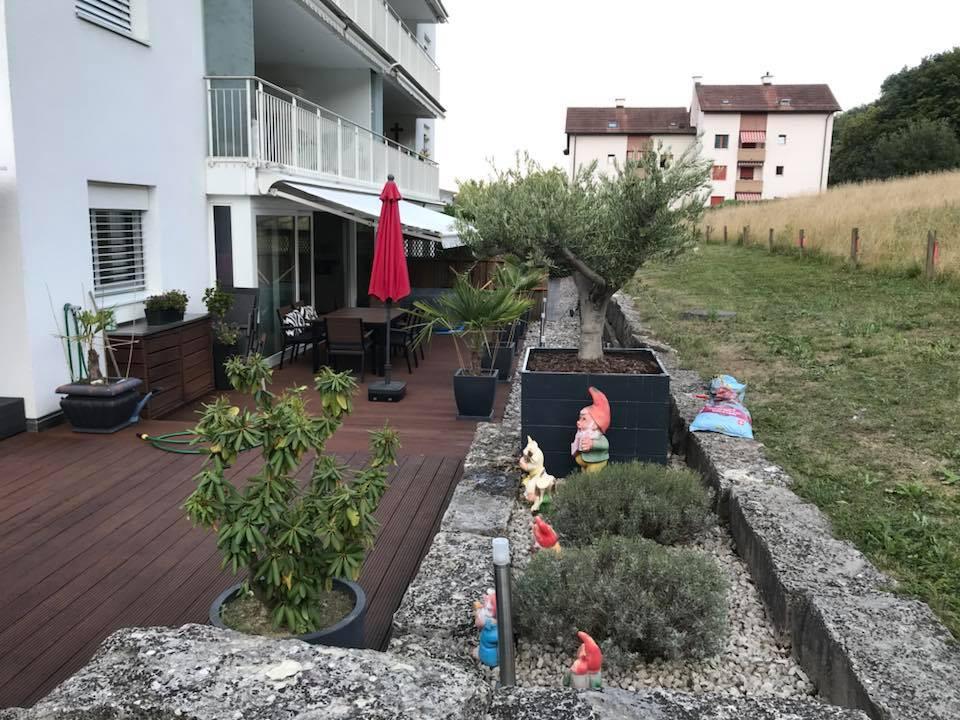 Olivenbaum kaufen Schweiz Olivenbäume Vazquez
