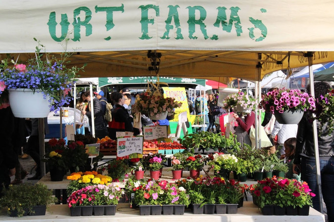 Downtown Farmer's Market - Opening Day!
