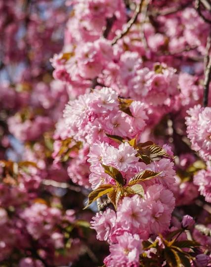 Spring Photos Around Hudson County
