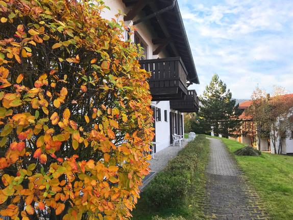Chrysantihof Zwiesel
