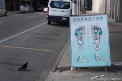 Pigeon Series No.1