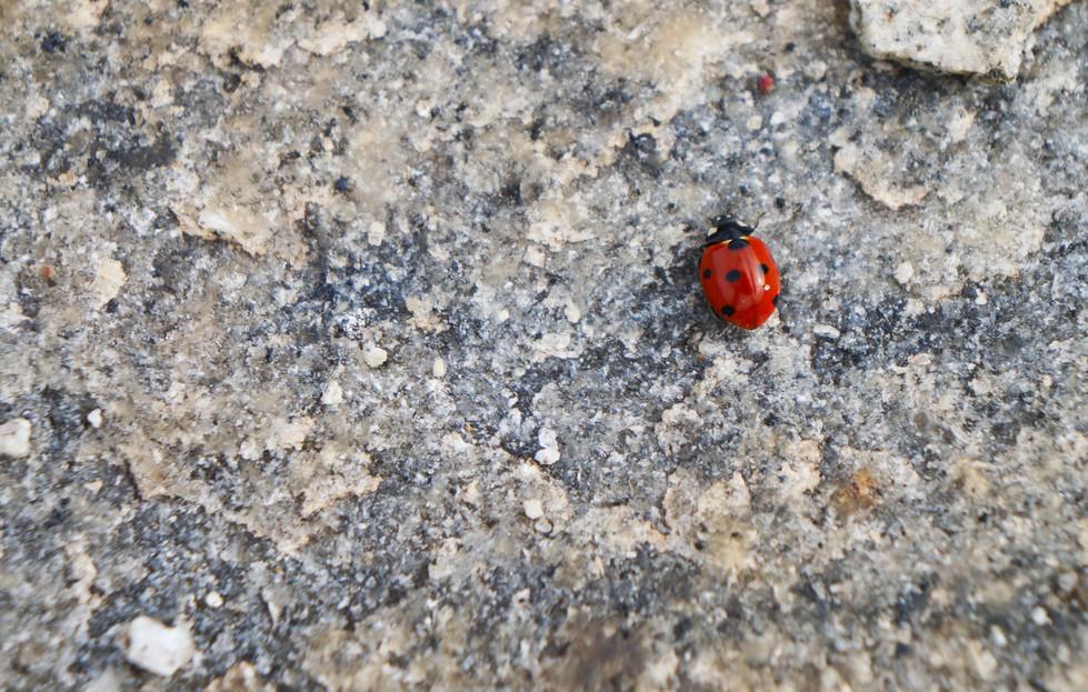 ladybugsymmetry4.jpg