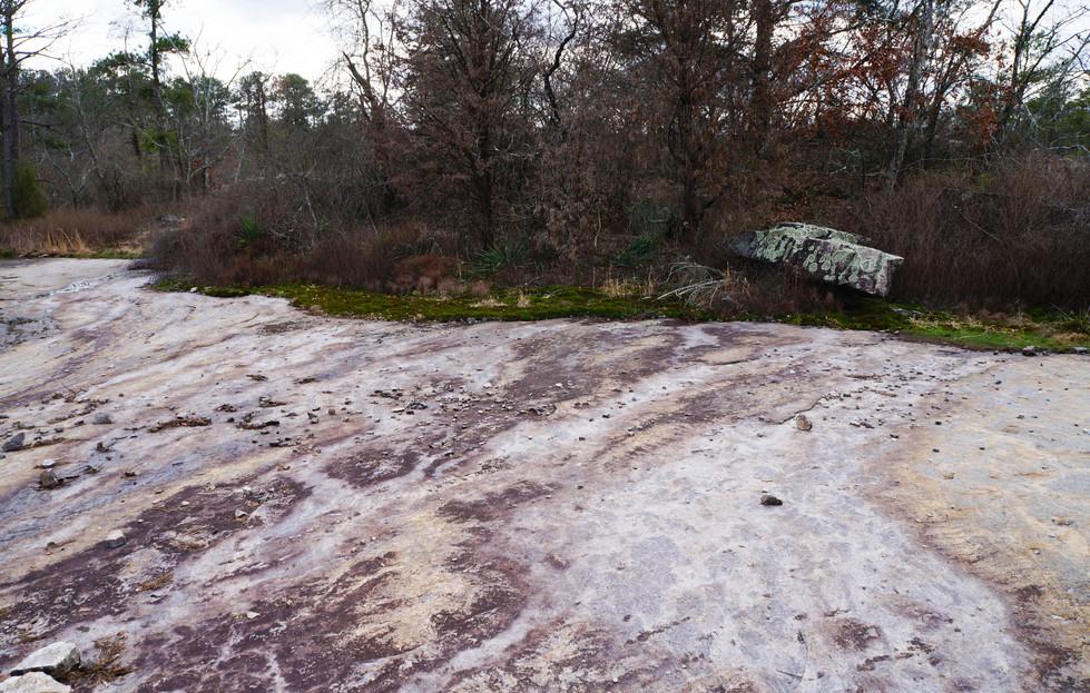 algaeonrockandmorphrock.jpg