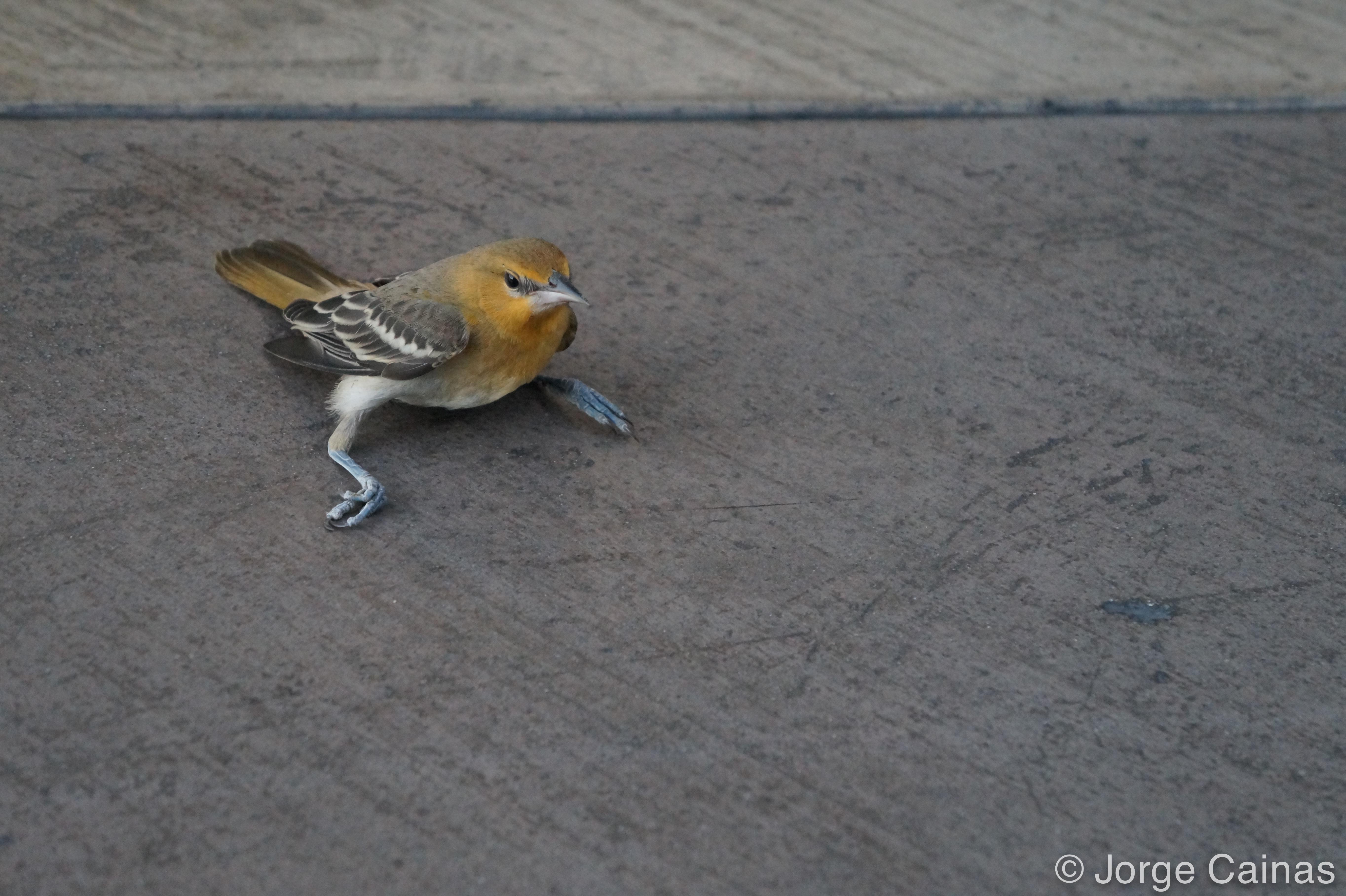 A Bird with Broken Legs