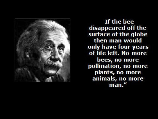 einstein bees.jpg
