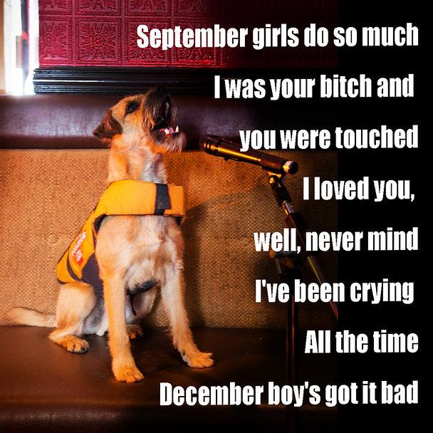 Dog December Boy Got It Bad Power Pop Me
