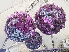 Floral Spheres