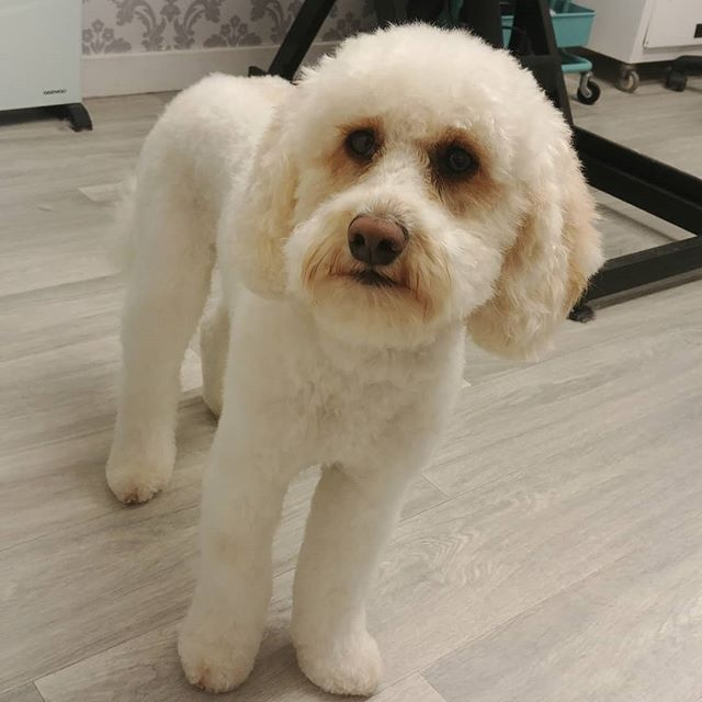 Gorgeous Alfie after his groom. _Whilst