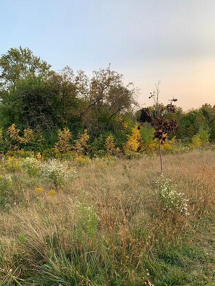 Field, natural art