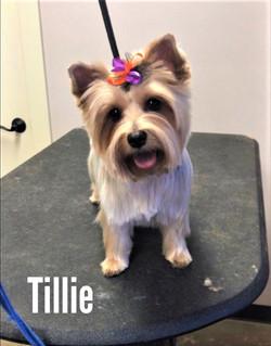 Tillie1