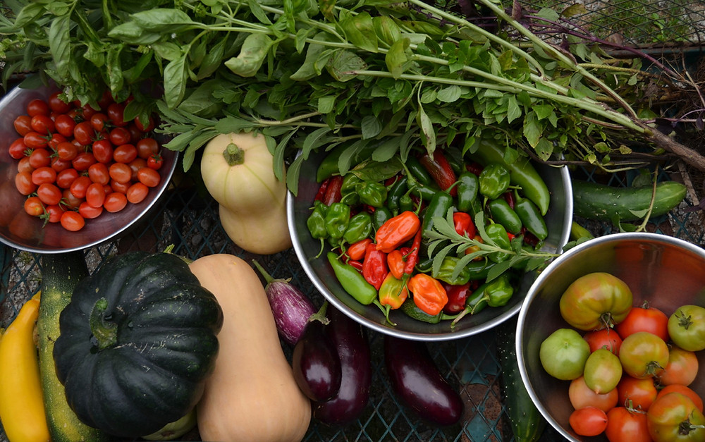 A spread of vegetables that includes tomatoes, basil, squash and eggplant.