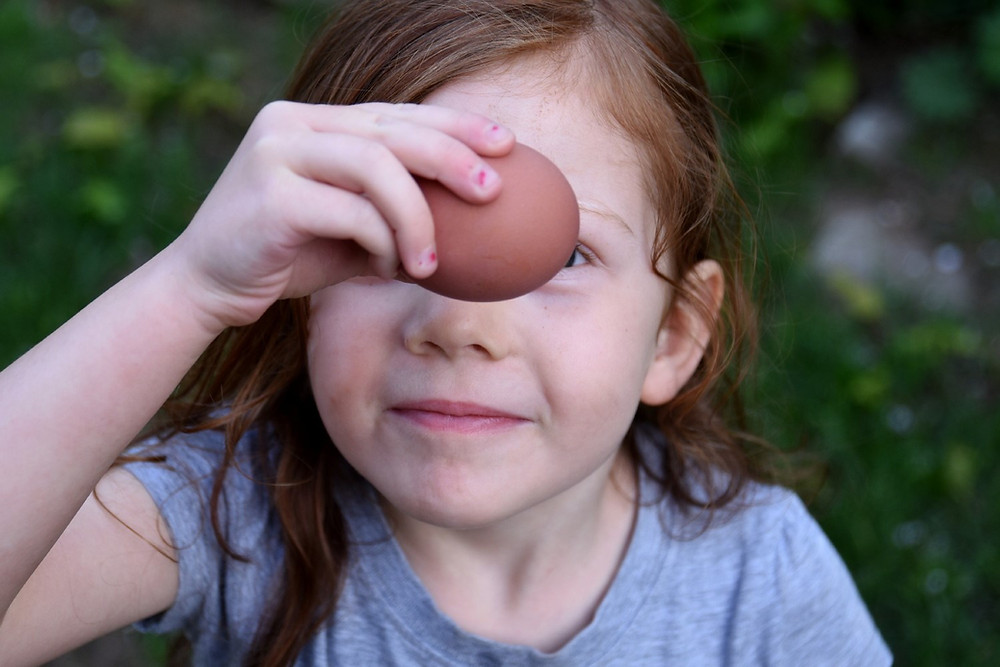Little girl holding a brown egg up to her face to look at it closely