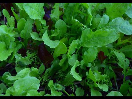 Let's Talk about Lettuce!