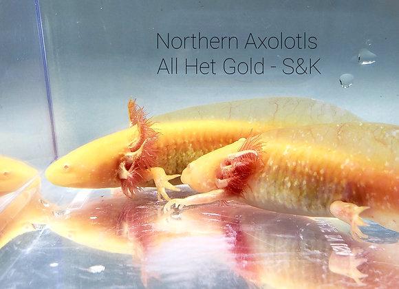"""4-5"""" All Het Gold - S&K"""