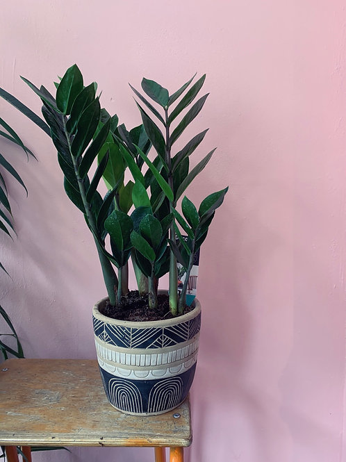 Zamioculcas plant in patterned pot