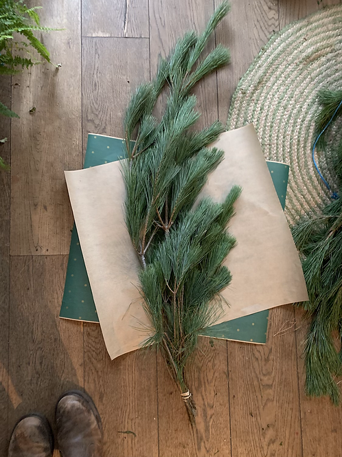 Pine (fine)