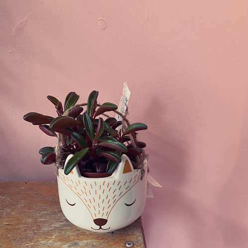 Fox hanger with little succulent