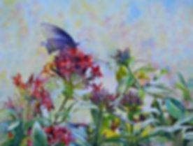 Swallowtail on Pentas Lanceolata 2, 18x2