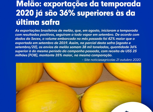 Melão: exportações da temporada 2020 já são 36% superiores às da última safra