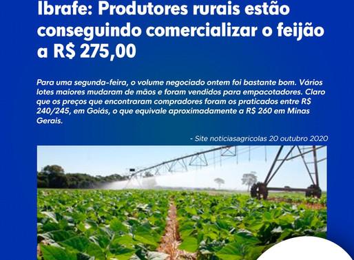 Ibrafe: Produtores rurais estão conseguindo comercializar o feijão a R$ 275,00