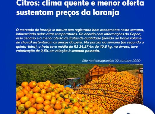 Citros: clima quente e menor oferta sustentam preços da laranja