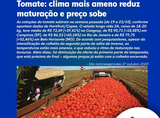 Tomate: clima mais ameno reduz maturação e preço sobe