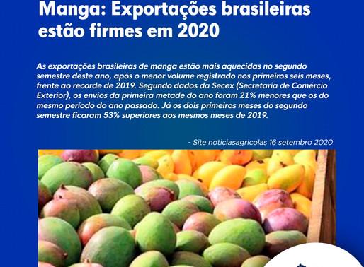 Manga: Exportações brasileiras estão firmes em 2020